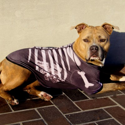 Pet Skeleton Halloween Costume